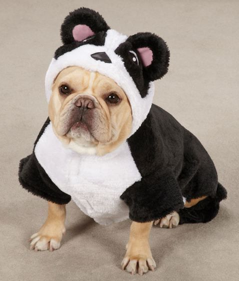 Casual Canine Panda Bear Dog Halloween Costume Xs Xl Pet