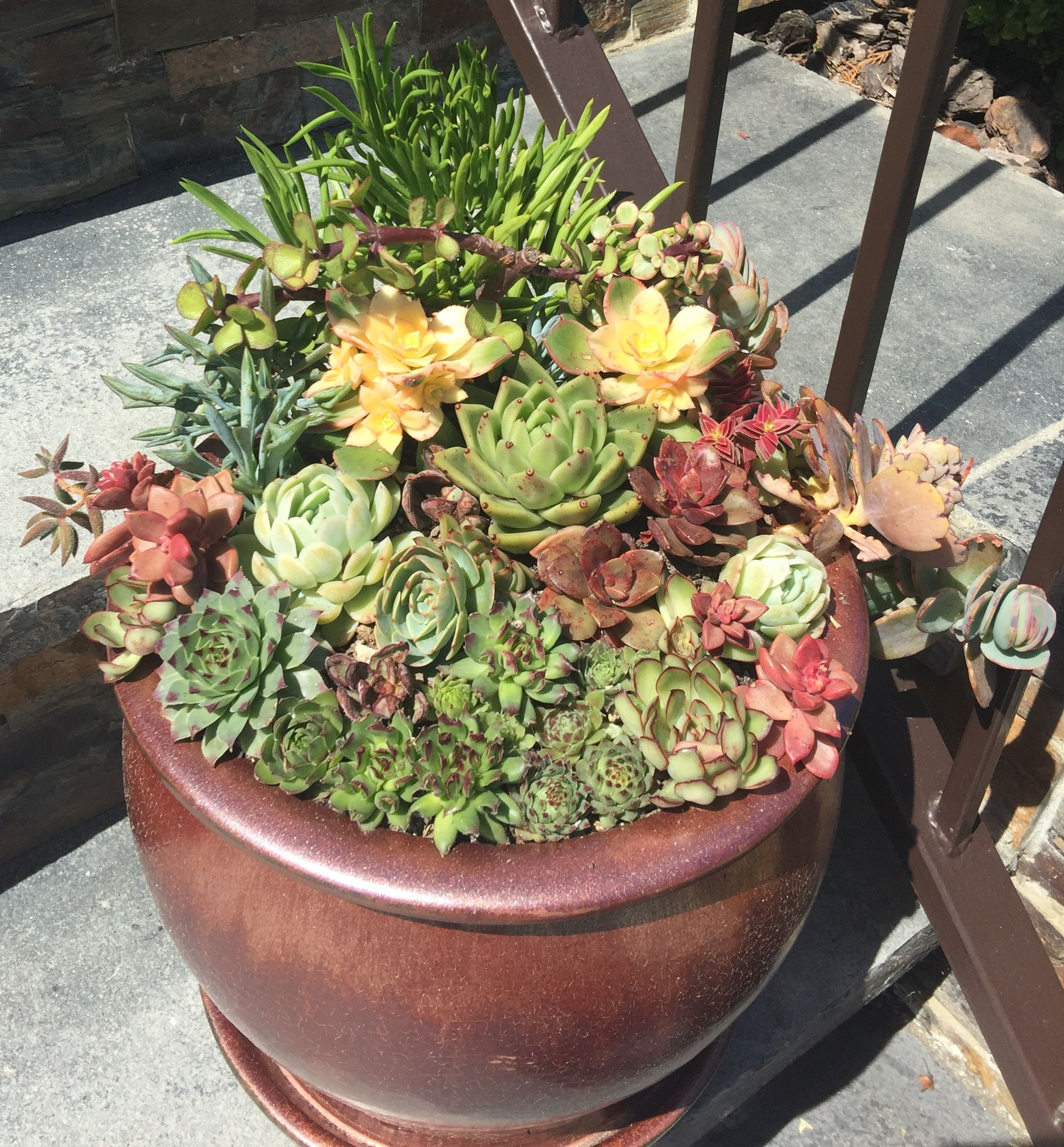 Succulent Pots On My Front Steps