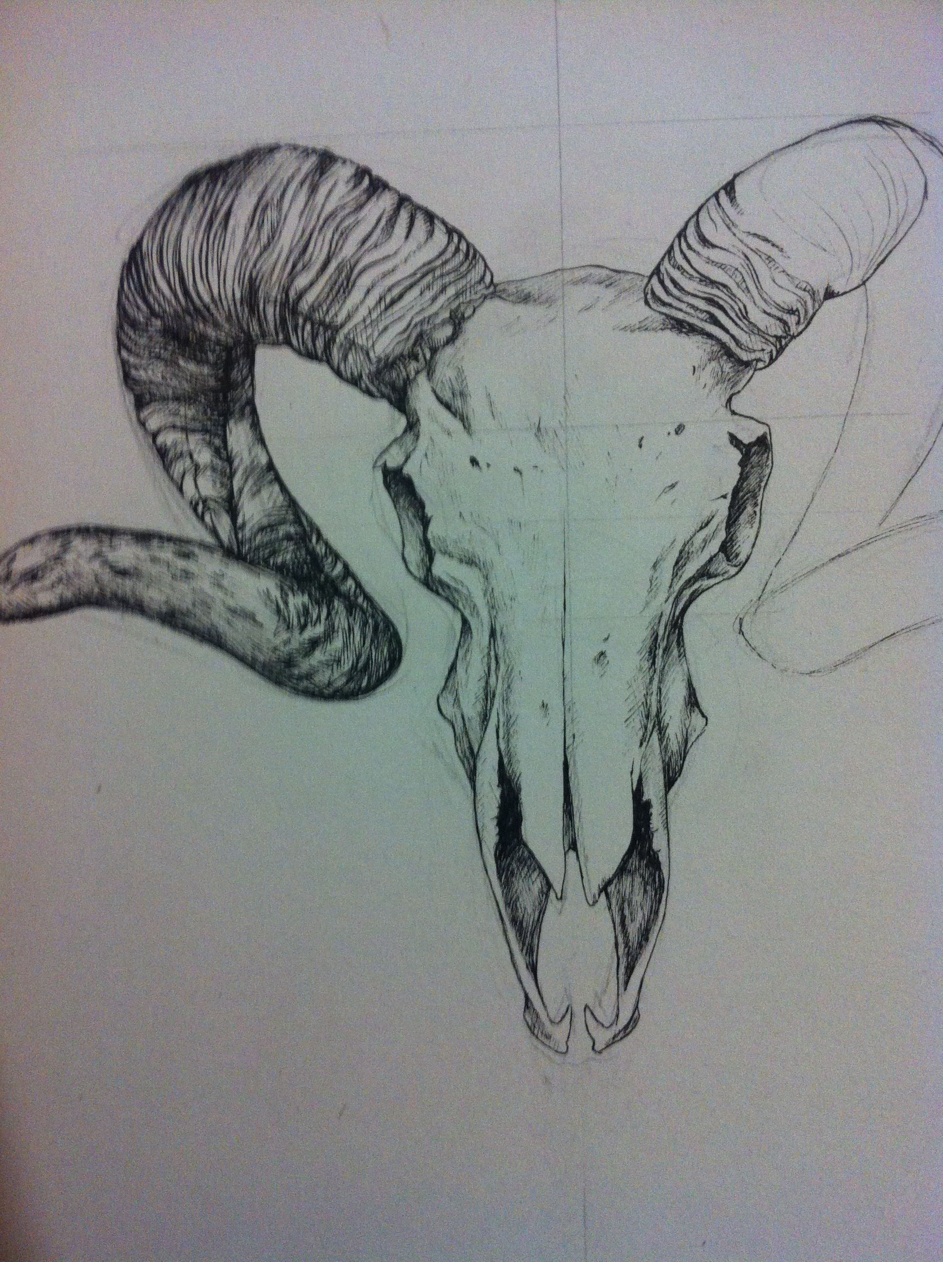 Pen drawing of a ram skull