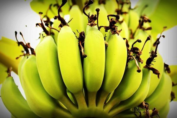 Como Fazer Biomassa De Banana Verde Receitas Com Biomassa