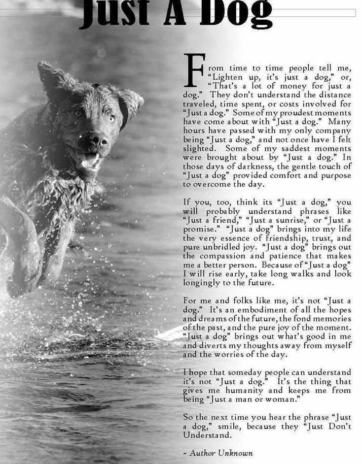 Prayer for lost pet Losing a pet, Pets, Prayers