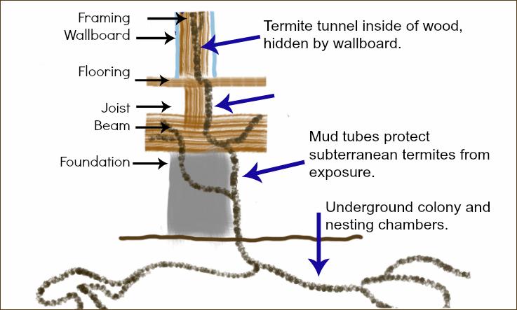 Subterranean Termite Colony Illustration by Thrasher Termite & Pest Control