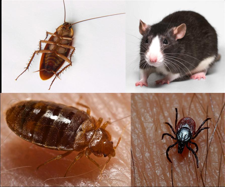 Pin on Bugs Good, Bad and Ugly