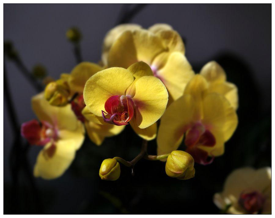 yellow  . .