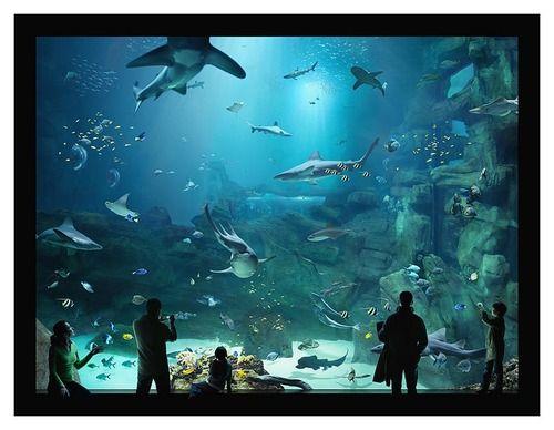 Seaworld, San Antonio TX   Sea world, Seaworld (san ...