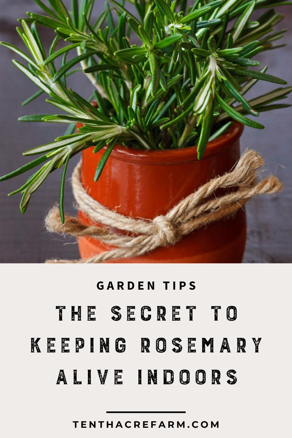 The Secret To Keeping Rosemary Alive Indoors In 2020 Growing Herbs Inside Growing Rosemary Indoors Planting Herbs