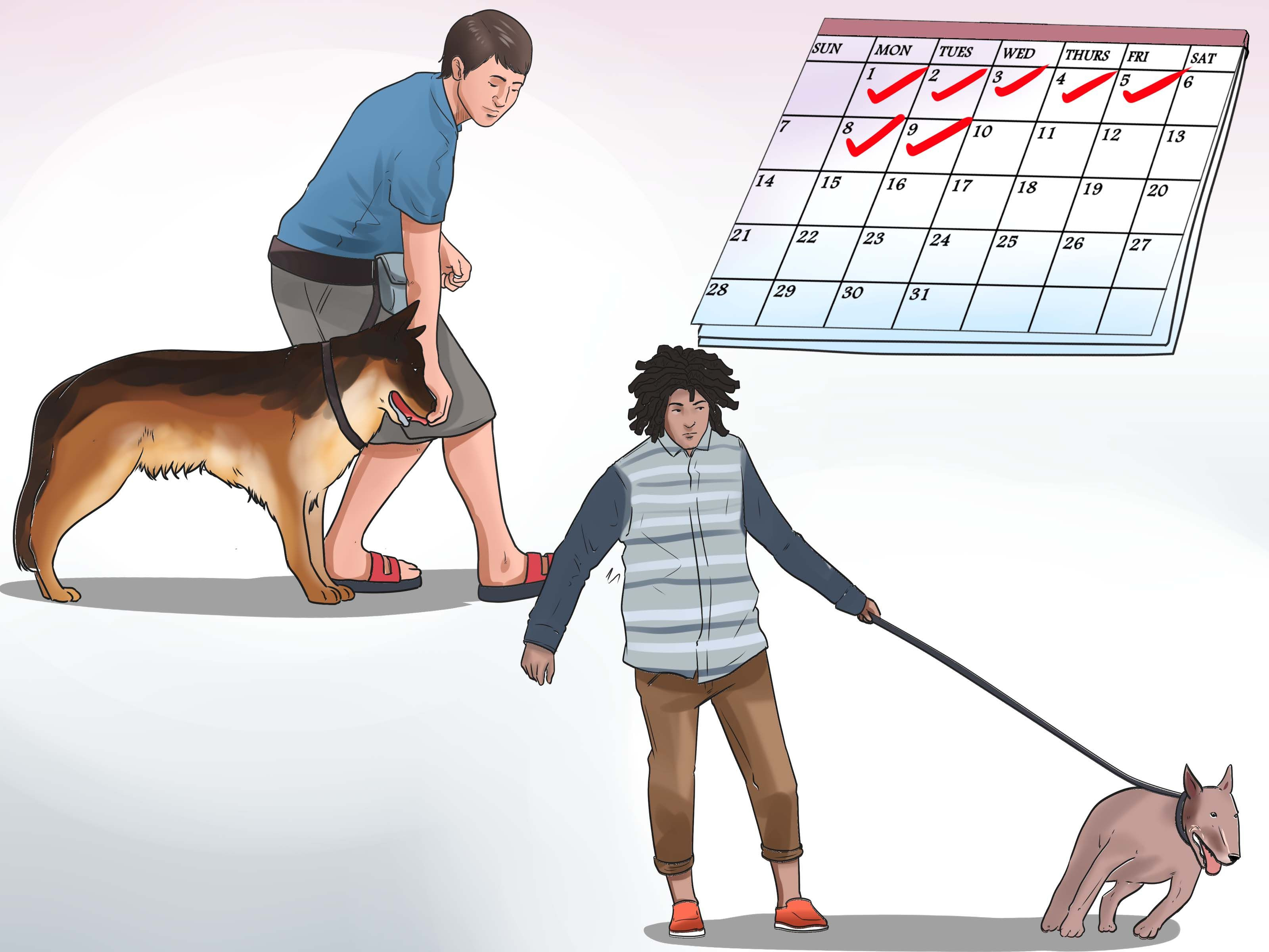 How to train an older dog to walk calmly on a leash