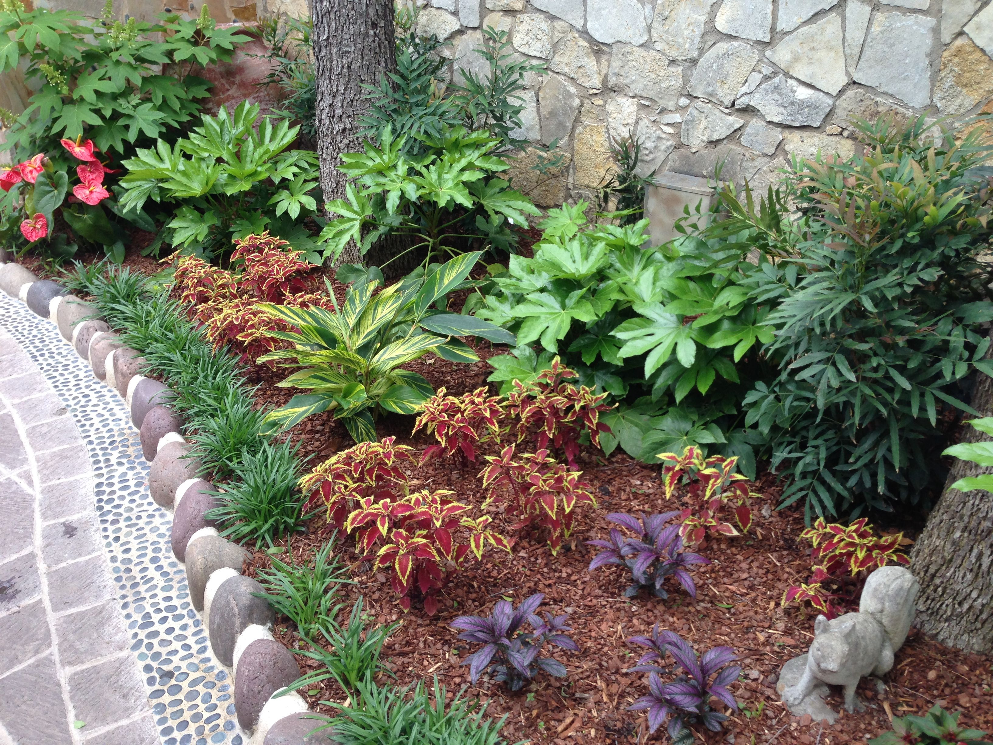 Coleus Variegated Ginger Dyerianus Persian Shield And
