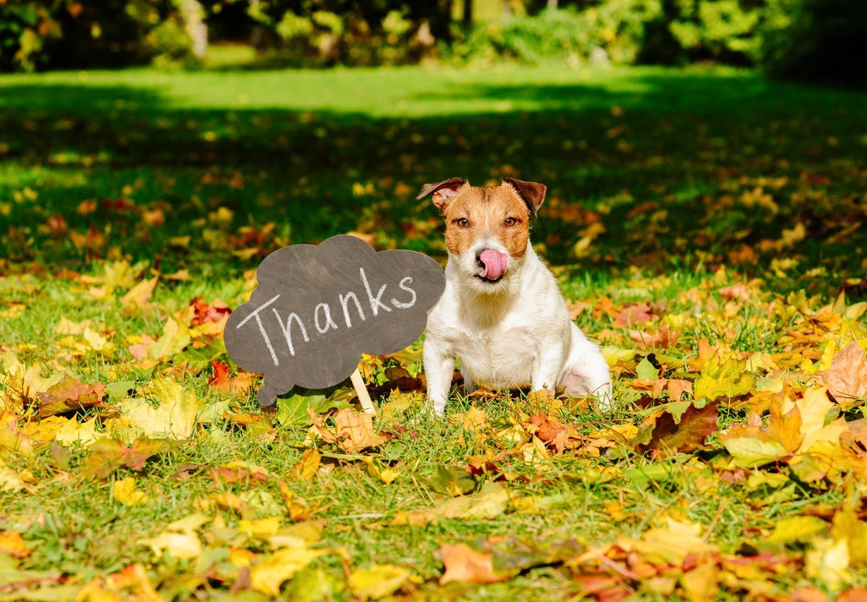 7 Reasons To Give Thanks For Your Dog Flying With Pets Turkey Dogs Pet Travel