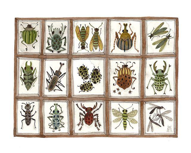 beetles weevils flies no. 4