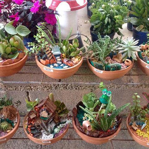 Resultado de imagen para tipos de suculentas y cuidados for Cactus cuidados exterior