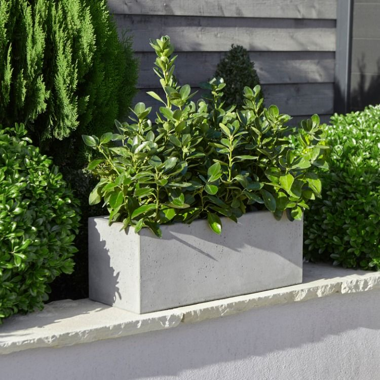 Sleek and contemporary, our Hoa troughs are perfect if you