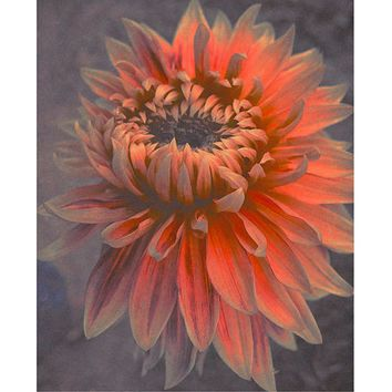 Chrysanthemum Fine Art Flower Print.Salmon Colored Flower. Coral Wall Decor.Dusty  Flower