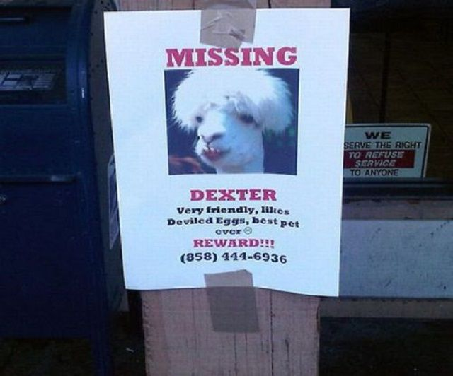 20 Funny Lost And Found Pet Posters Find Pets Losing A Dog