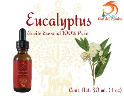 El Aceite Esencial de Eucalyptus es Antitusivo, mucolítico y expectorante. Su refrescante aroma es reconocido por su capacidad para despejar la mente y estimular los sentidos. Es un antiséptico natural de las vías respiratorias.