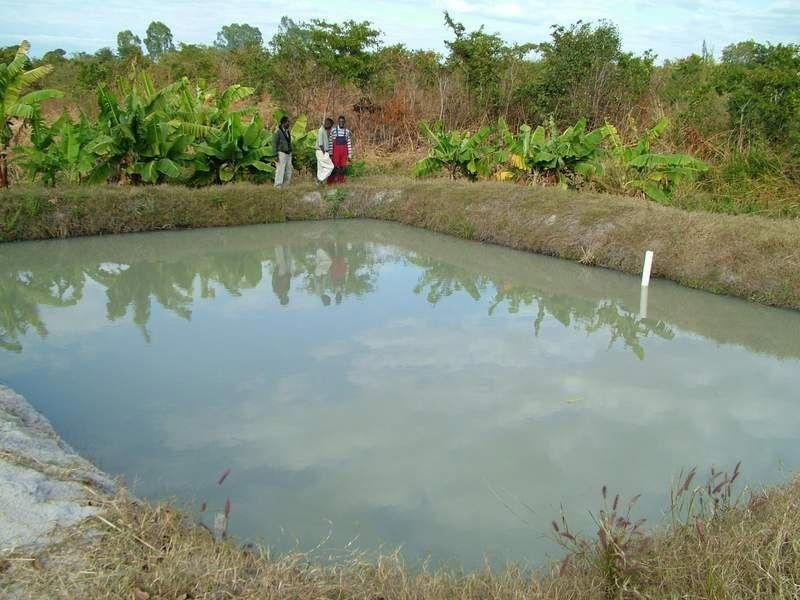 Tips For Building Ponds In Your Backyard Backyard Water Feature Fish Pond Aquaponics