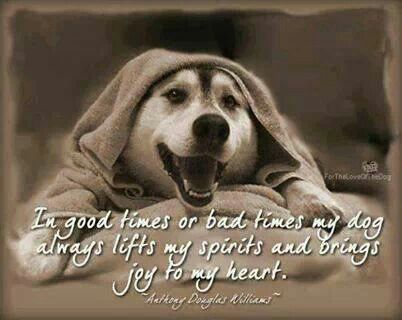 Smiling Dog Quotes In Good Times Or Bad Times My Dog Always Lifts