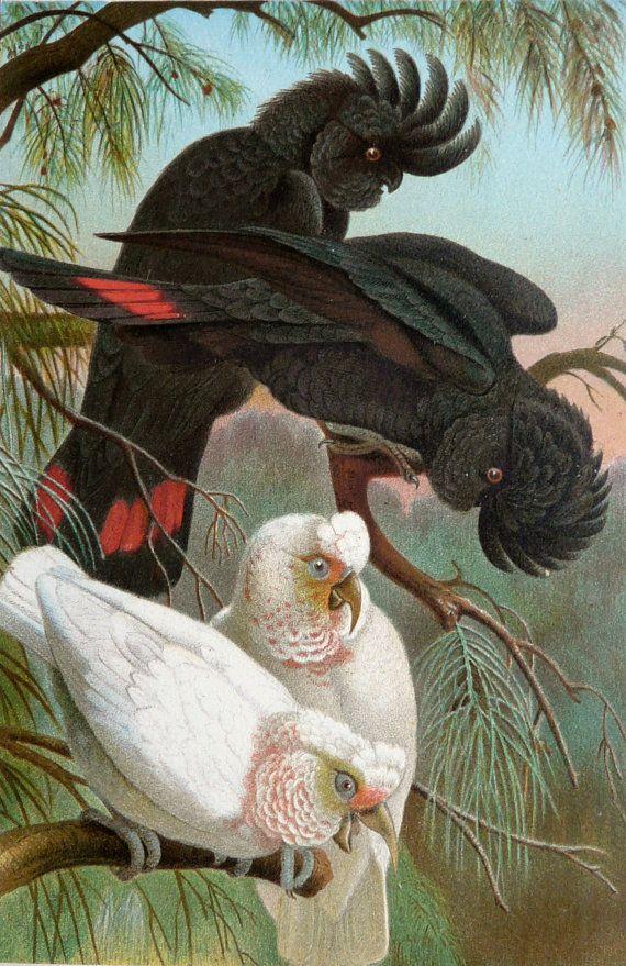 Antique Cockatoo Parrot