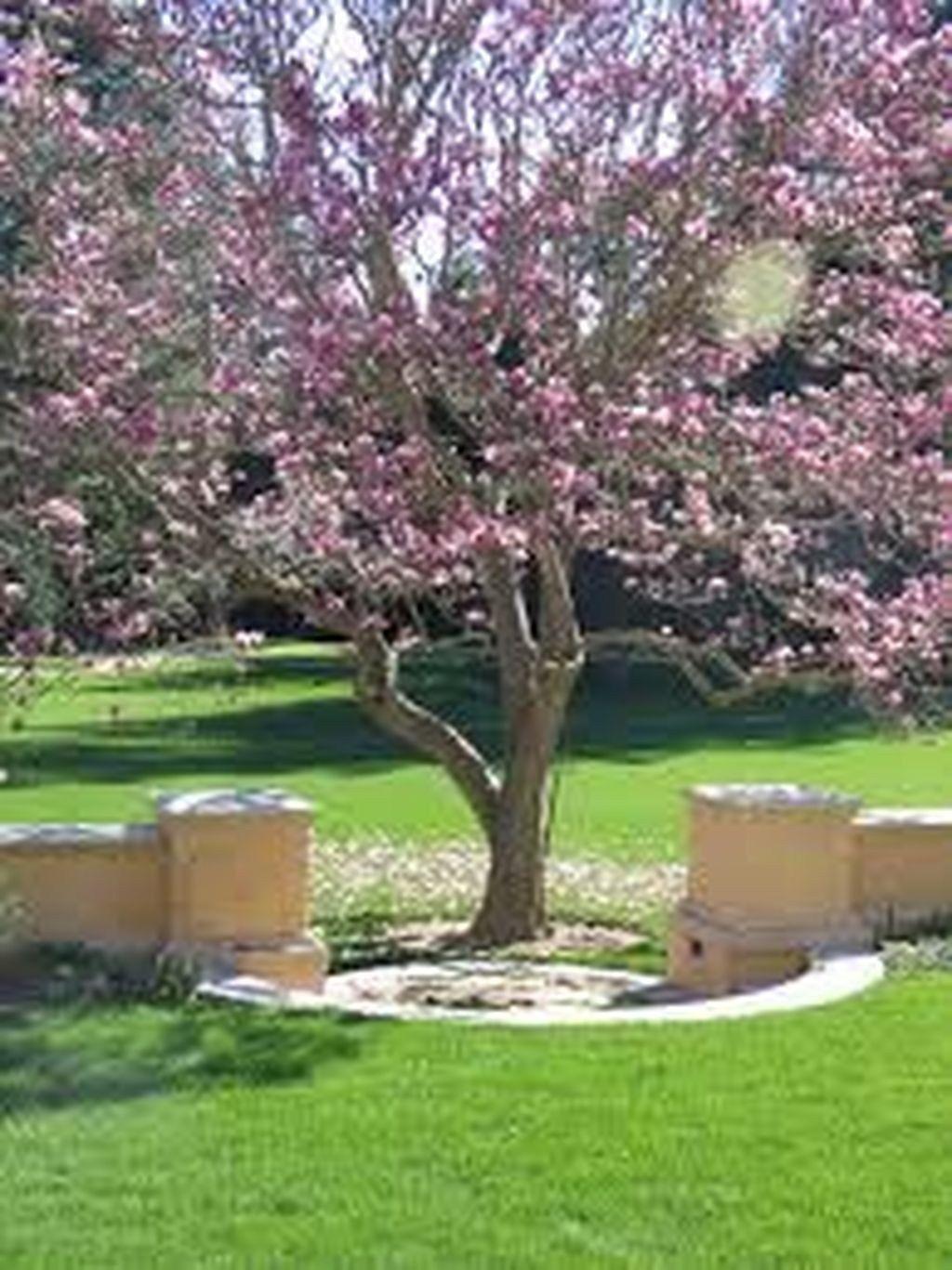 Amazing Big Tree Landscaping Ideas01 Front Yard Landscaping Landscape Design Front Yard Landscaping Design