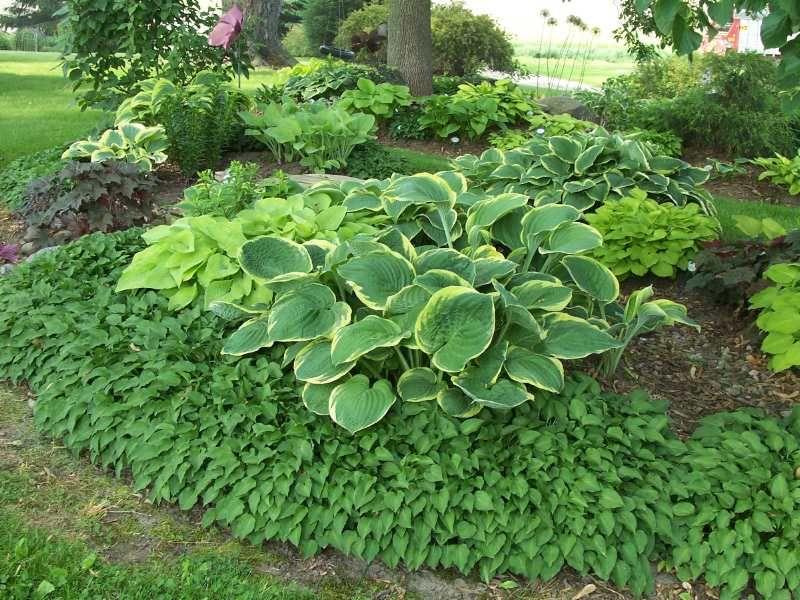 Hosta Garden Designs love this hosta paradise 20 Wonderful Hosta Garden Ideas Design Ideas