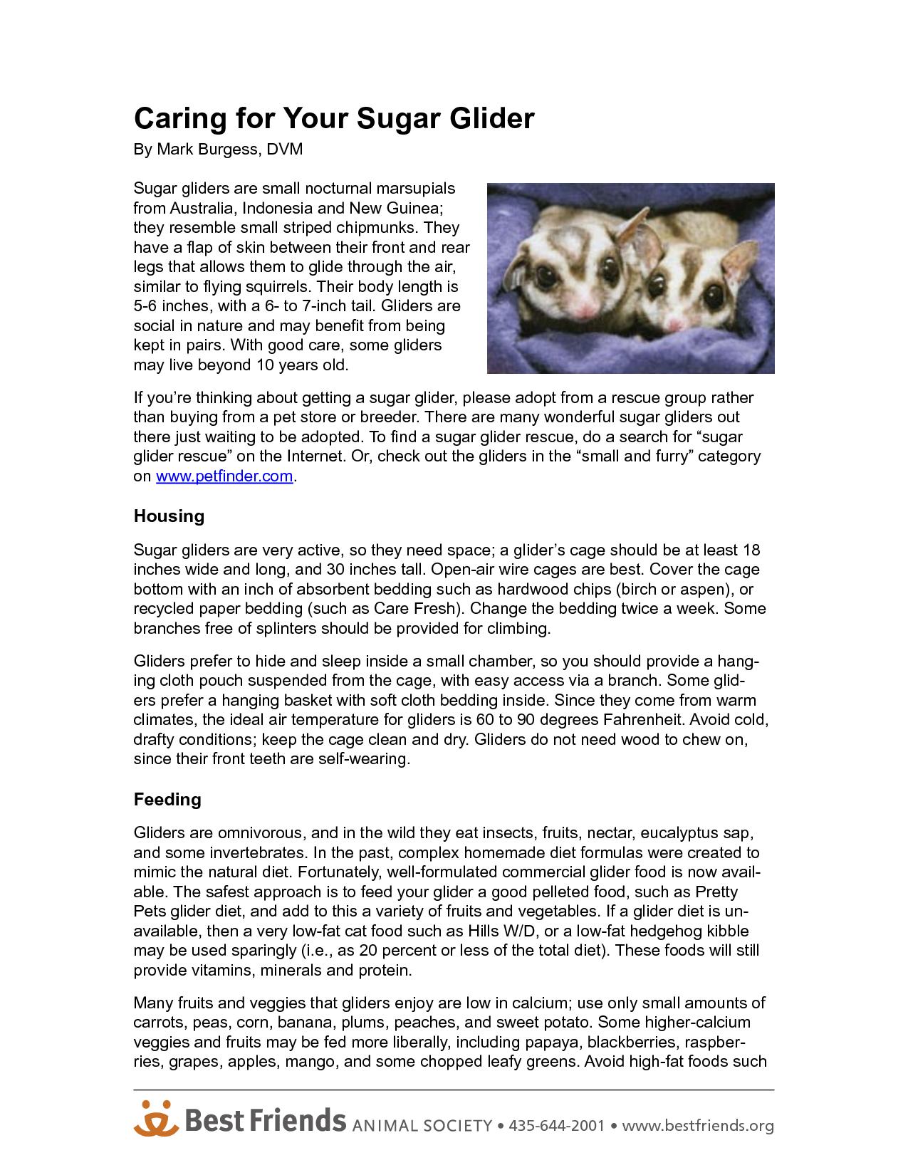 sugar glider facts - Google Search   SUGAR GLIDERS   Pinterest