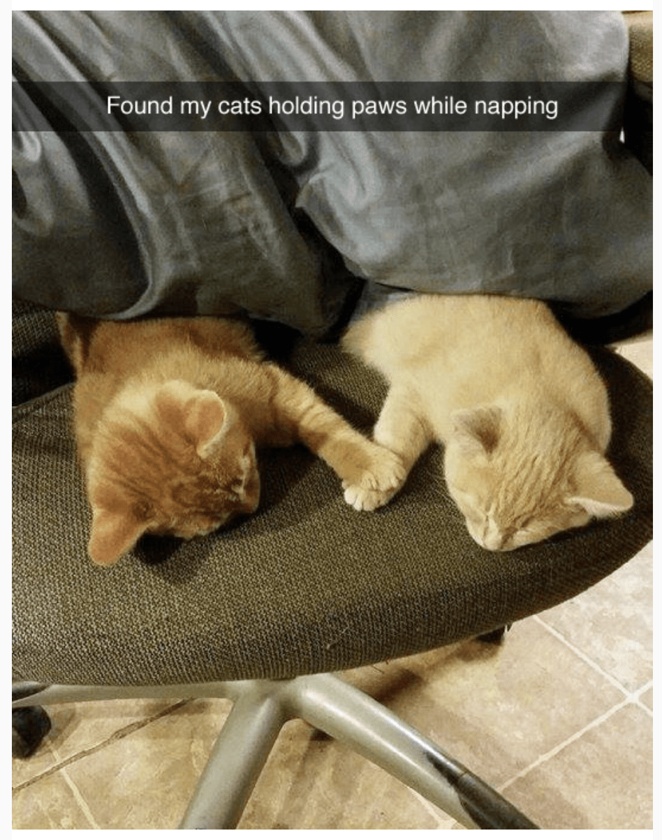 50 Heartwarming Memes And Posts That Will Change Your Perspective Cats Kittens Funny Cat Tags