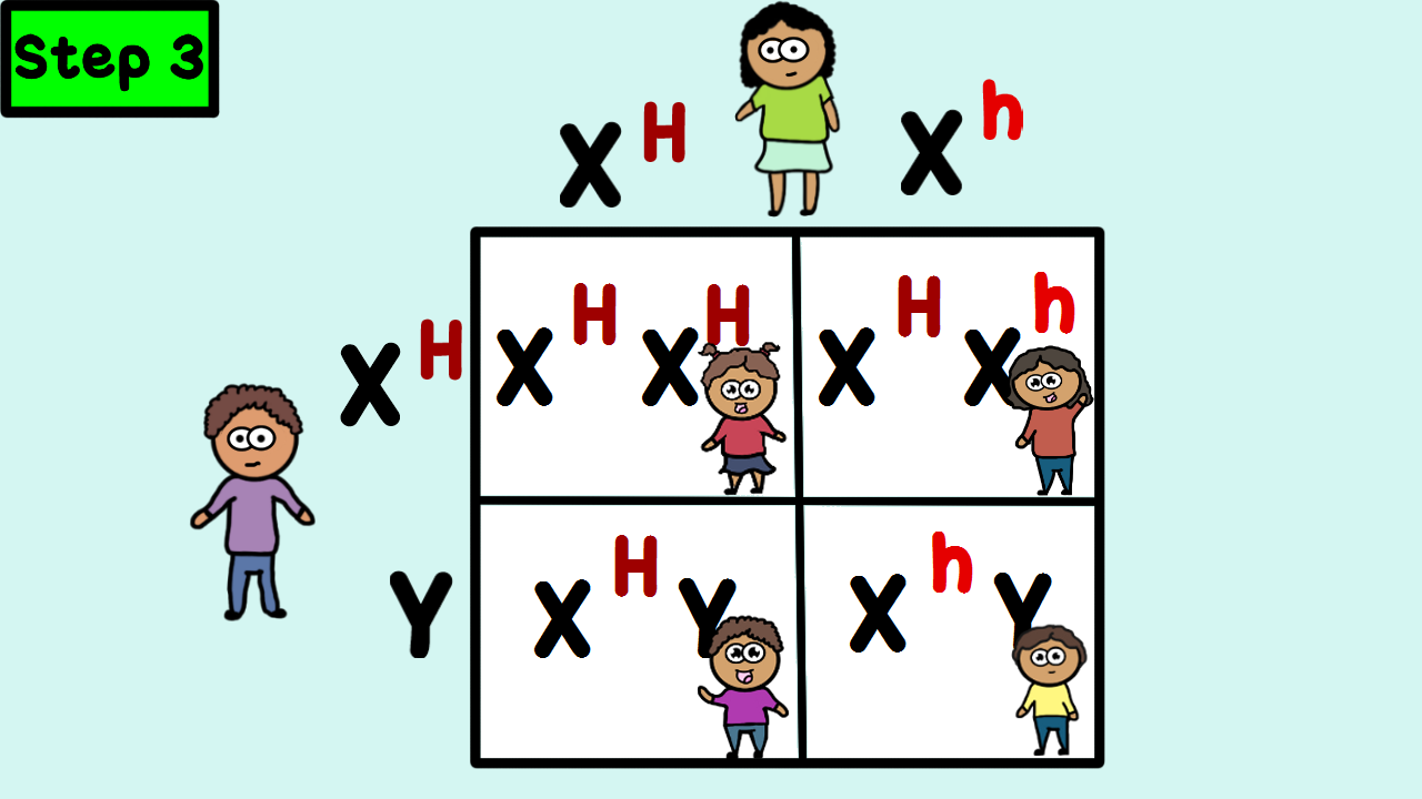 worksheet Sex Linked Problems Worksheet Answers learn how to make a punnett square for sex linked traits hemophilia in