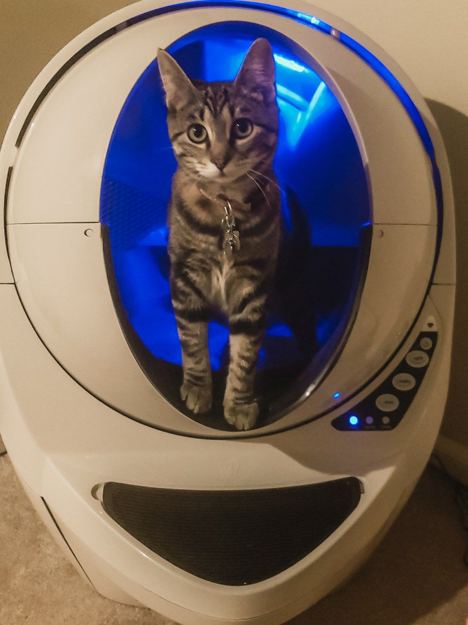 Managing The Litter Box While Pregnant Cat Litter Box Litter Best Litter Box