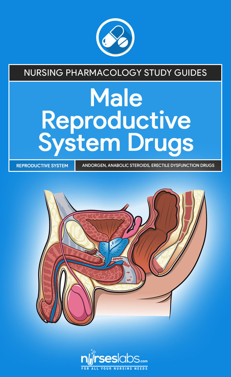 male reproductive system drugs pinterest reproductive system rh pinterest com male and female reproductive system study guide anatomy of the male reproductive system study guide