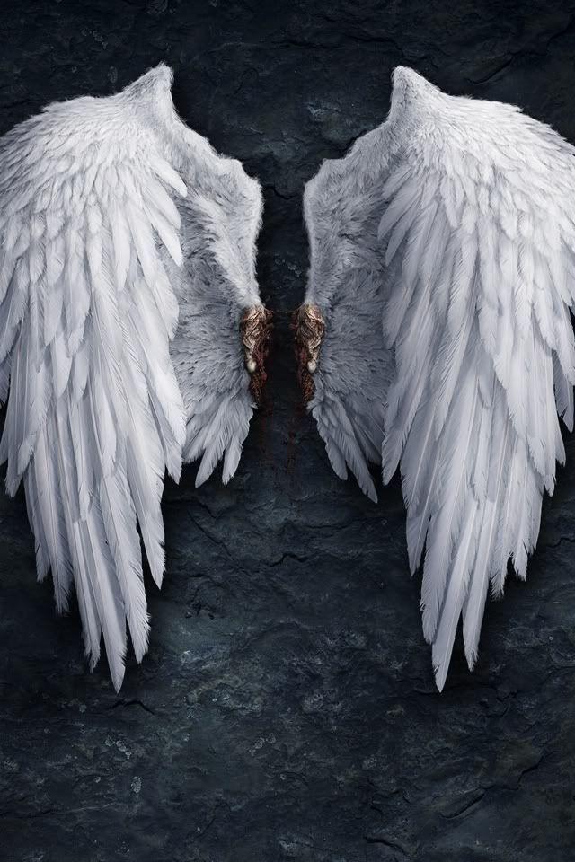 Pvnsp15 S Image Lucifer Wings Wings Wallpaper Angel Black devil wings wallpaper