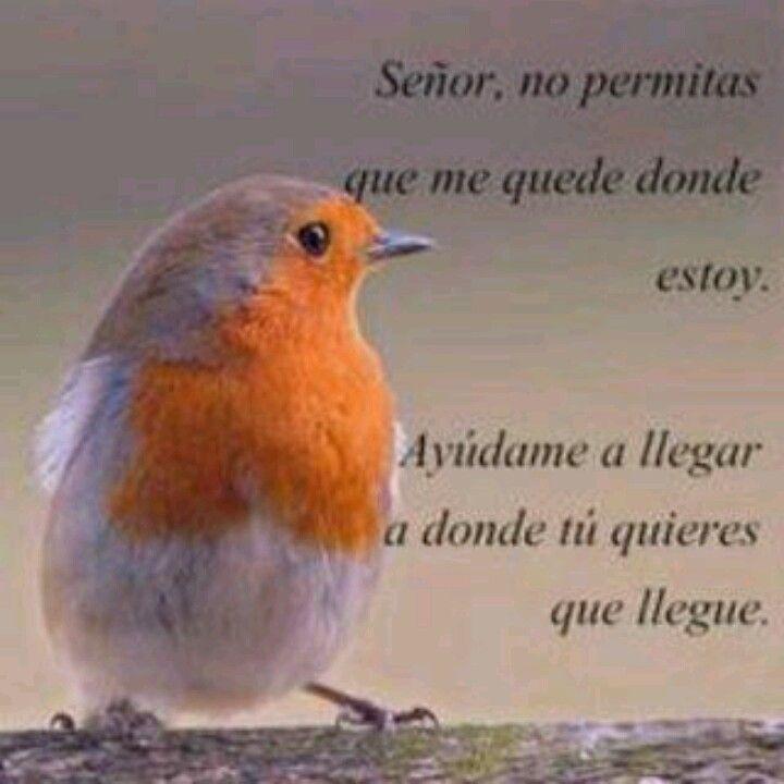 Señor No Permitas Que Me Quedr Donde Estoy Ayudame A Llegar A Donde Tu Quieres Que Llegue Frases Frases De Salmos Frases Pensamientos
