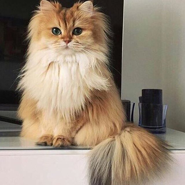 Beautiful cat!!