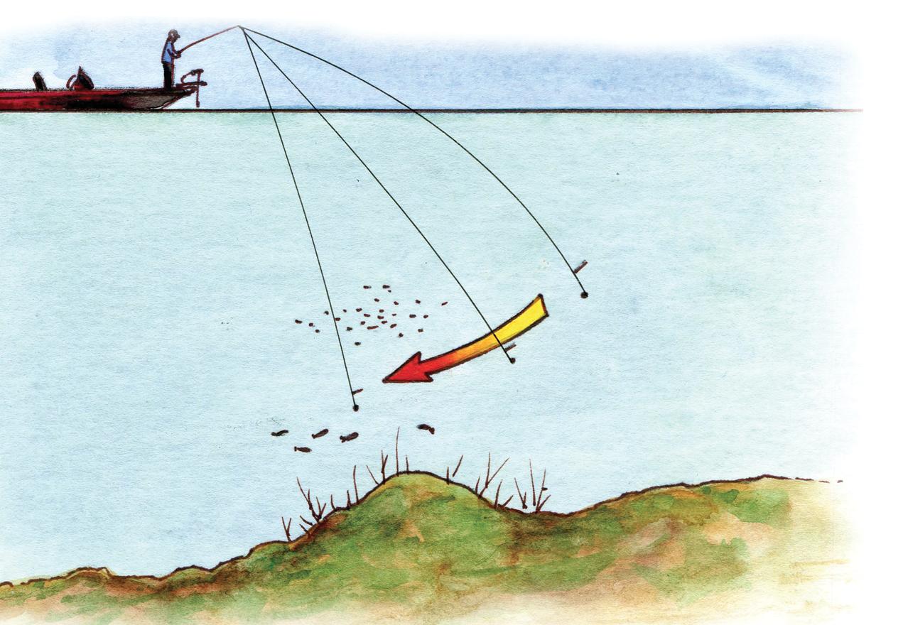 5 must-know drop shot tactics   Bass Fishing   Fish, Bass