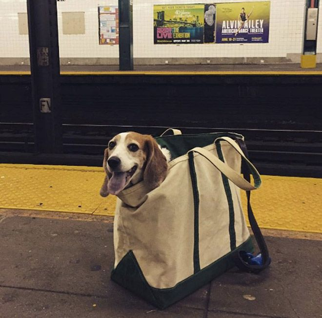 Nyc Subway Banned Dogs Unless They Fit In A Bag Dog Owners Did Not Disappoint Funny Dog Pictures Cute Dogs Funny Animal Pictures