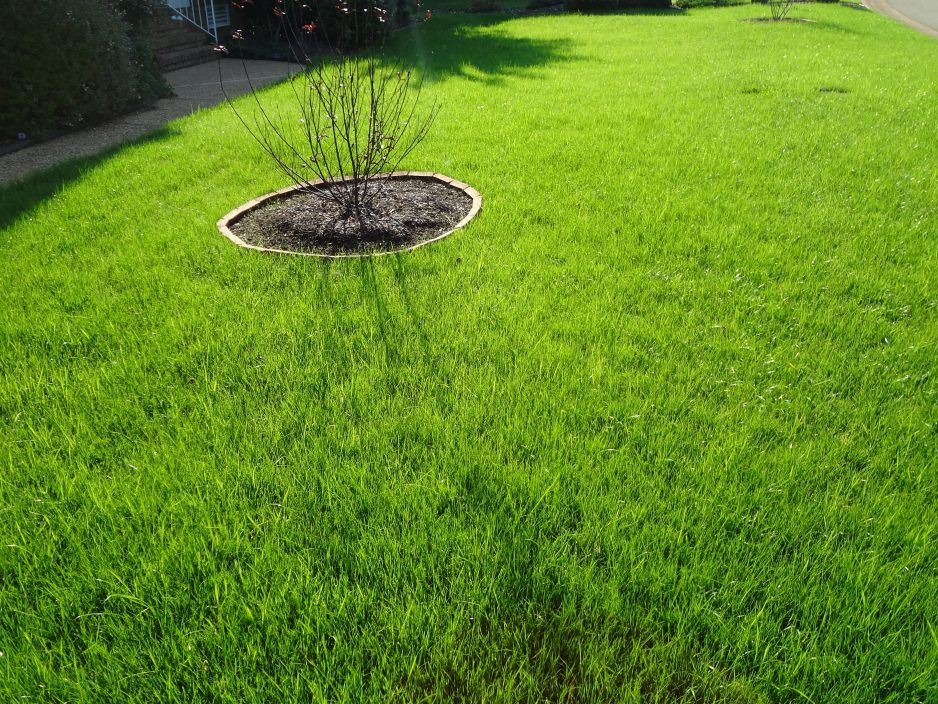 Use Compost Tea On Your Lawn In The Fall To Bring It To Life Compost Tea