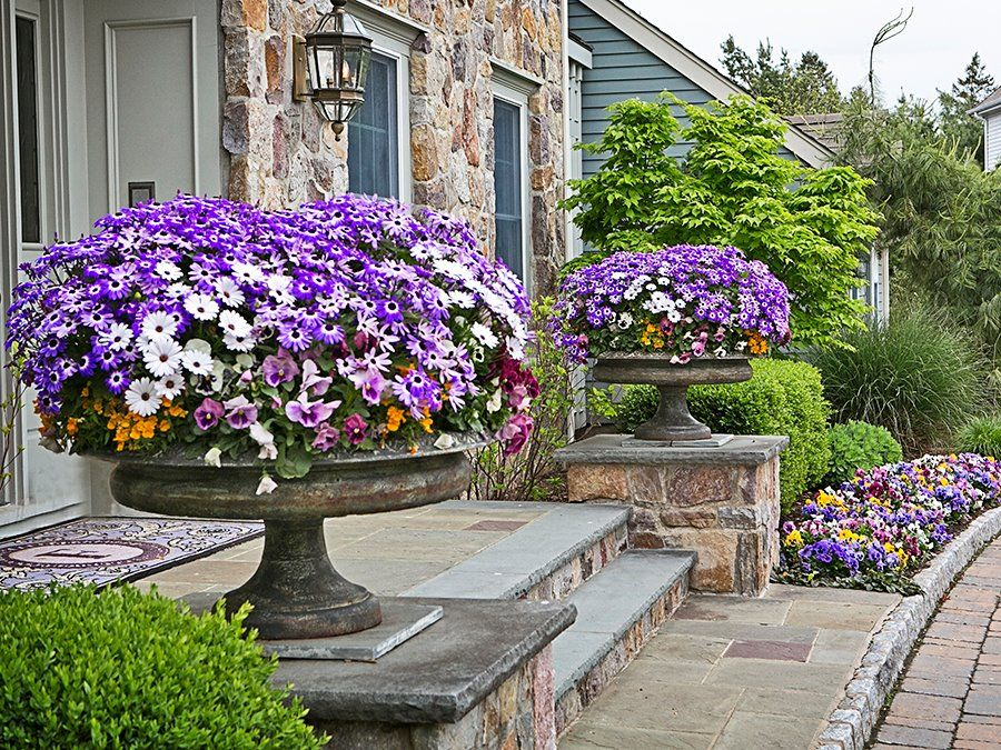 spring color Container gardening, Garden containers