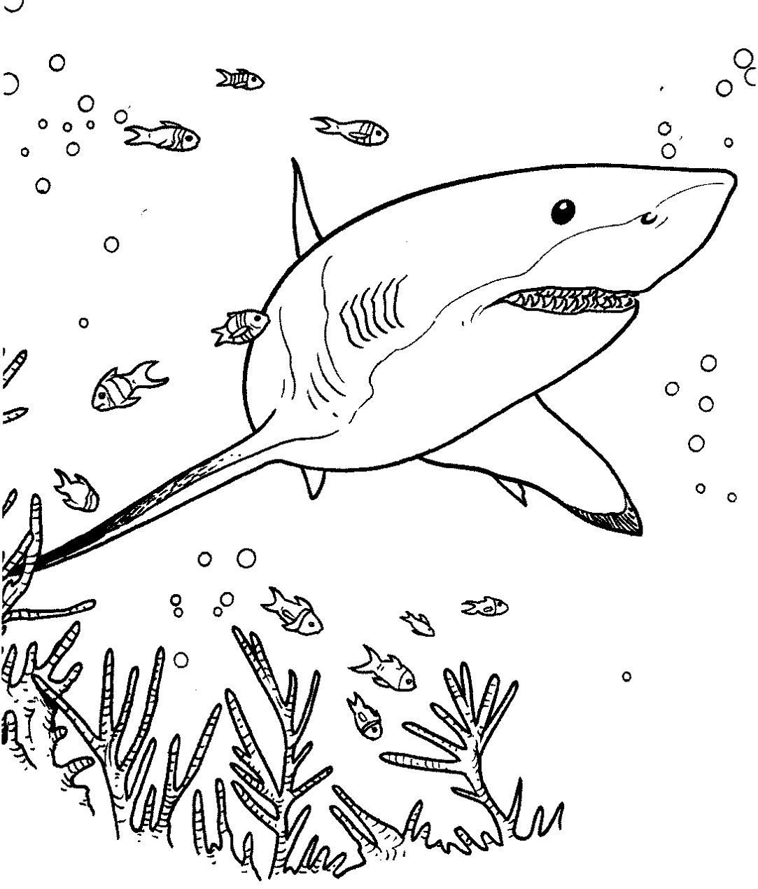Shark Fish Coloring Pages Display