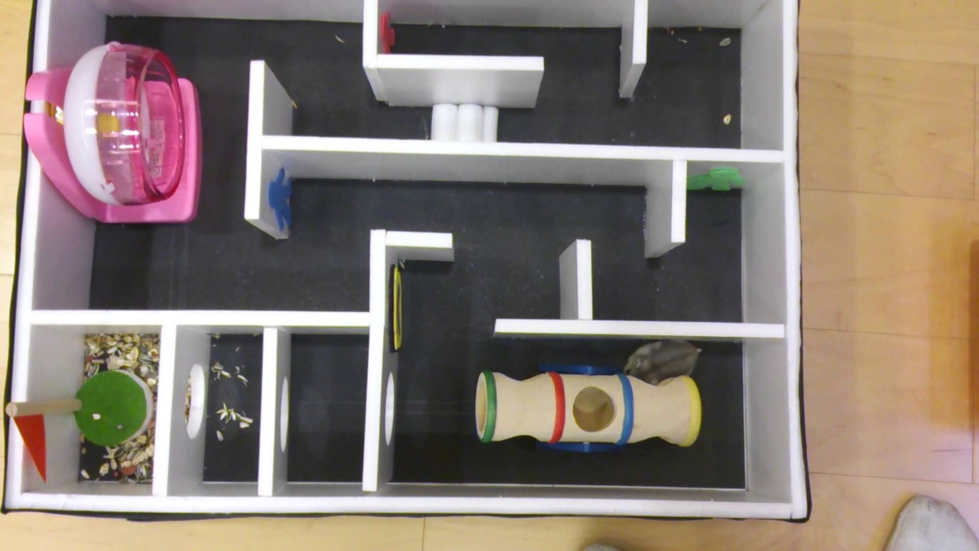 dylan tang&danny chen-hamster maze(9th grade science fair project