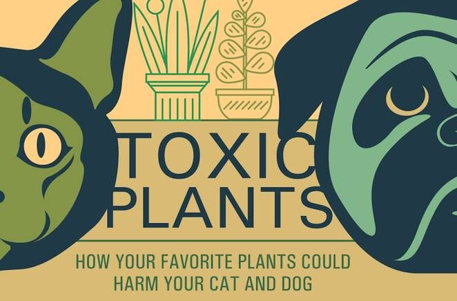Houseplants that are toxic to animals... Good info!!