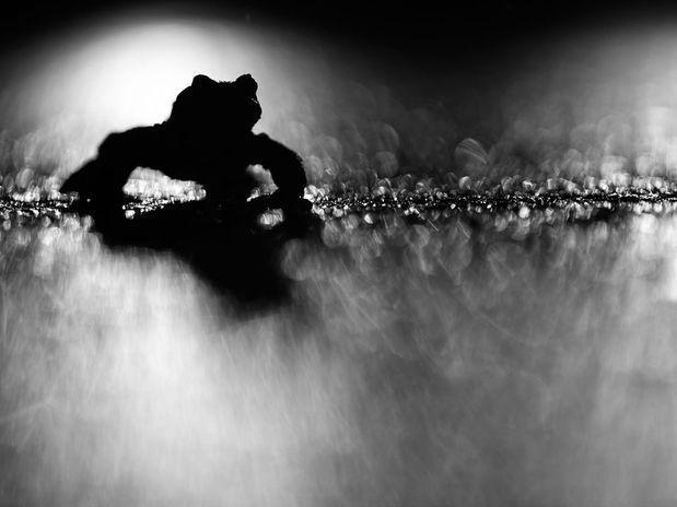 "Ganadora del concurso ""Nature Photographer of the Year 2012"" de Klaus Tamm"
