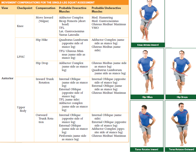Training by Teri: NASM CES Study Guide Chapter 6 – Movement ...
