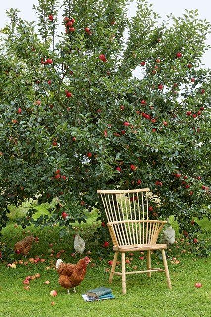 Small garden ideas | Pinterest