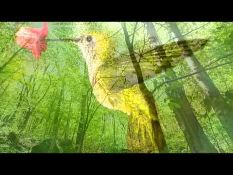 Songs : Yoga Music Bird Sounds: One Hour Nature Sounds Music for Meditation and Relax, Massage and A...