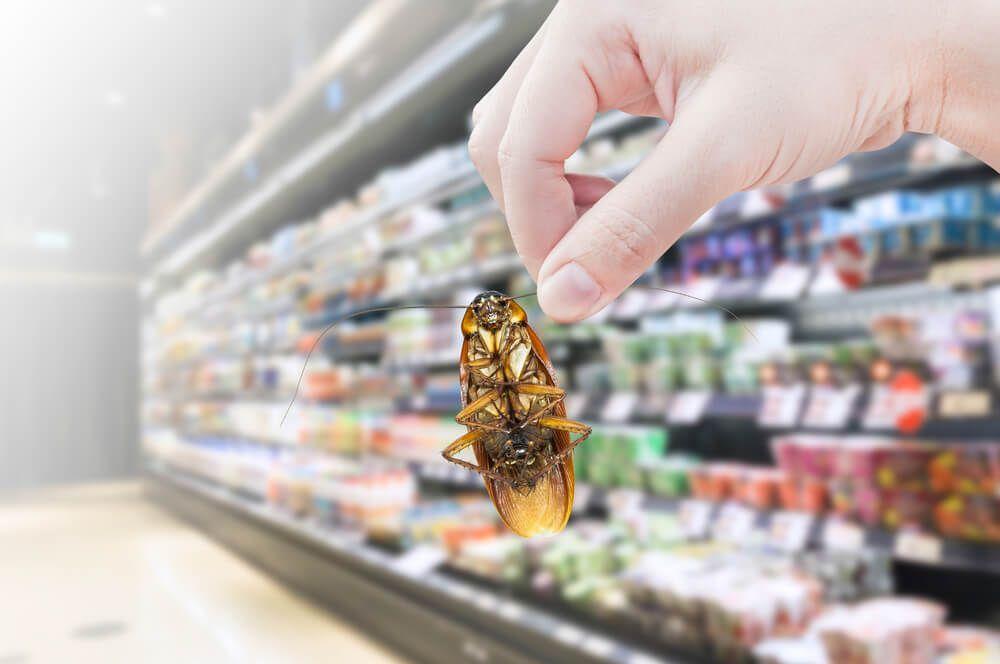 Beverage pest control services by total pest elimination