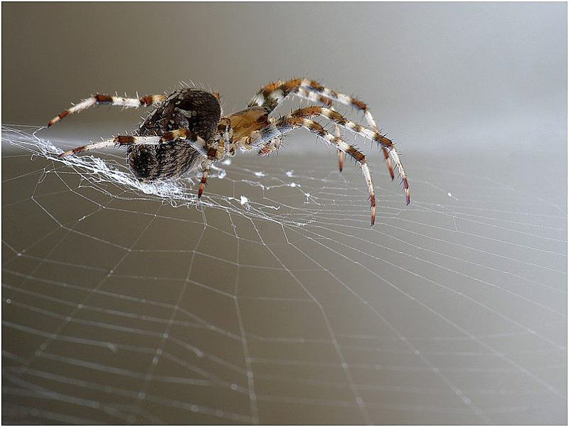 spider Animals bugs, Arachnids spiders, Spider