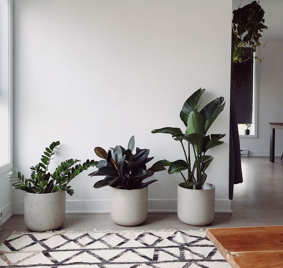 Our Favorite Feng Shui Plants for Purifying the Air -   16 plants Office feng shui ideas