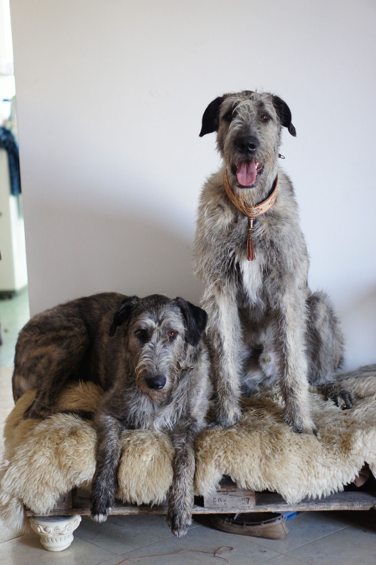 .Love this bed for Kirby. Irish wolfhound, Wolfhound