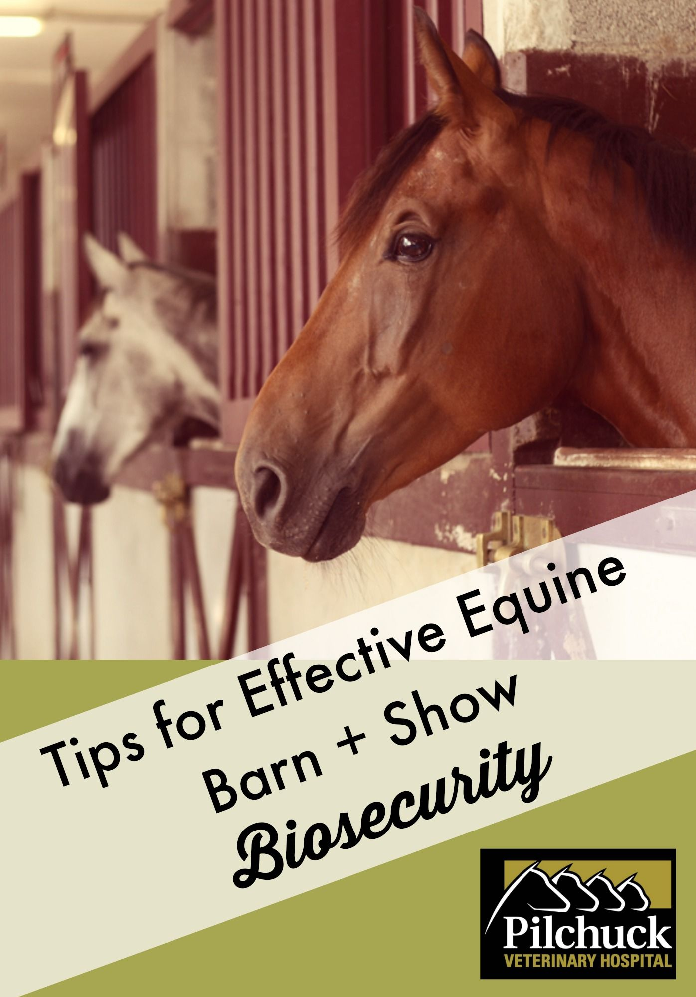 Equine Barn and Show Biosecurity by Dr. Wendy Mollat
