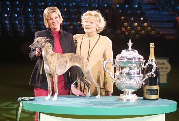 Crufts Best In Show 2004 Cobyco Call The Tune Whippet