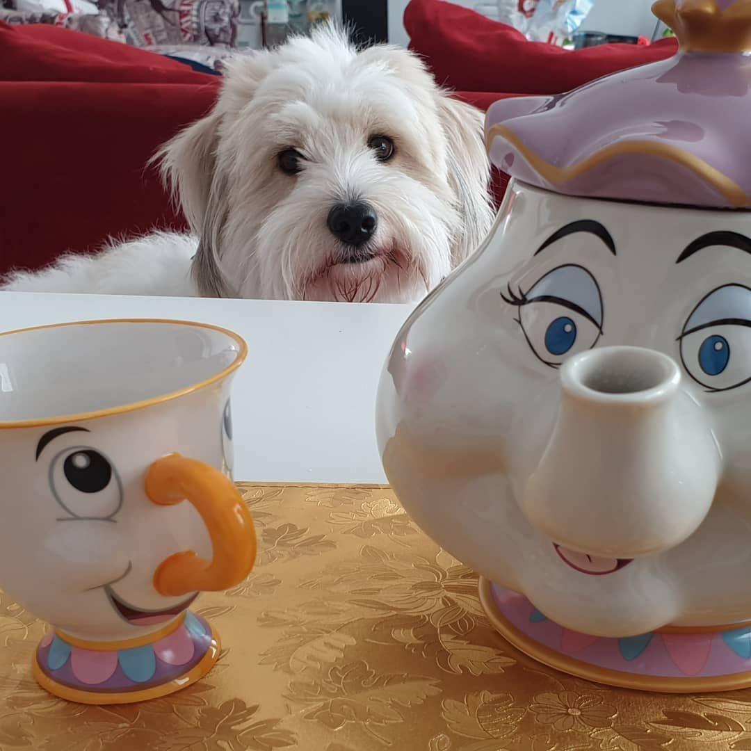 Madamepottine Und Tassilo Das Ist Eins Der Geschenke Die Mama Zu Weihnachten Bekommen Hat Sie Hat Sich So Sehr Dar Dog Language Your Dog Dogs